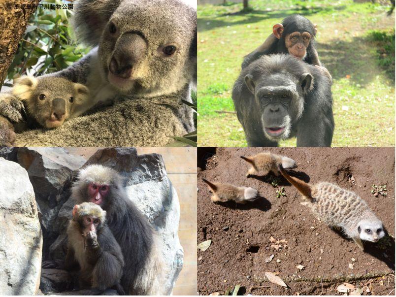ベビーラッシュの春だから!平川動物公園のかわいい動物ベビーたち