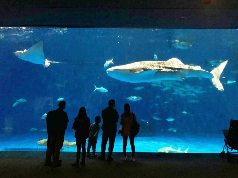 ジンベエザメに会いたい!想像以上の癒しの1日を過ごせる「いおワールド」へ