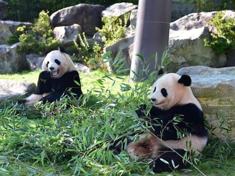 キュートな動物と白浜の海に癒される!パンダ三昧&シーサイドトリップ