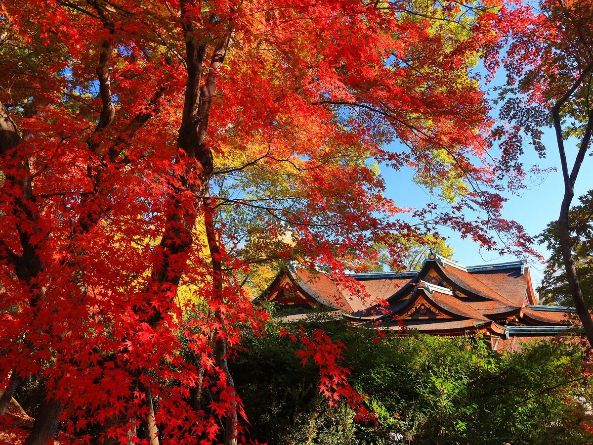 京都 紅葉 の 名所