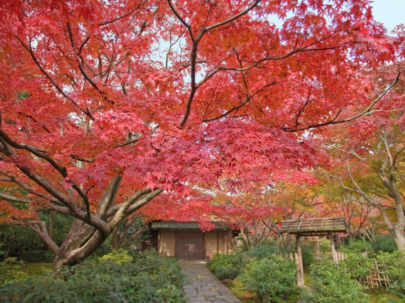 万博記念公園で紅葉狩り!1万本もの木々が色づく園内は一見の価値あり