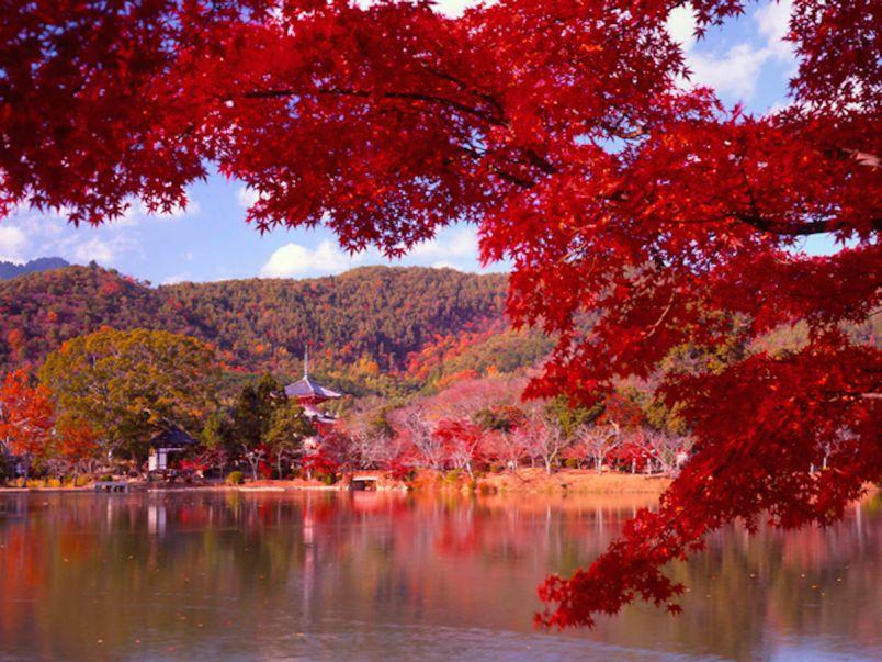 特別公開の寺院のライトアップは格別!嵐山~奥嵯峨野の紅葉をめぐる