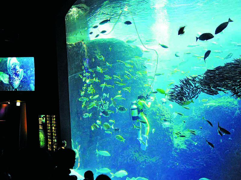 「ヒルナンデス!」で紹介された芸達者な動物も!いま行くべき全国の動物園&水族館10選