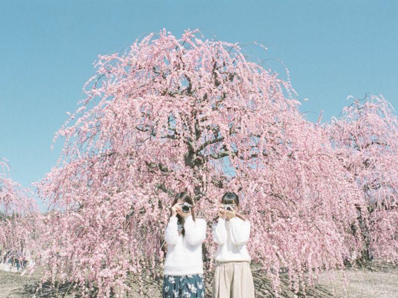 三重におでかけして、甘い梅の香りに包まれてみませんか? 【Masaの関西カメラさんぽ】