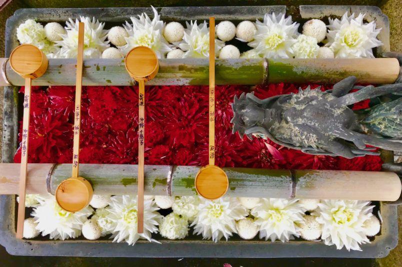 京都・長岡京市おすすめのお花見スポット3選!花手水や真っ赤なツツジで春を満喫です♪