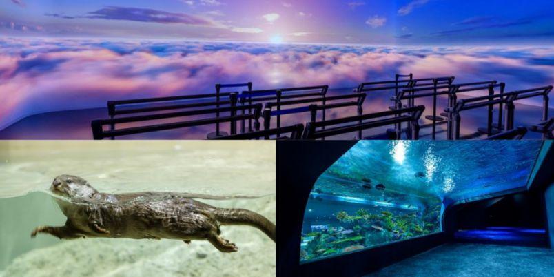 【沖縄】リニューアルした「DMMかりゆし水族館」を徹底解説! 映像・光・音で魅せる展示をご紹介