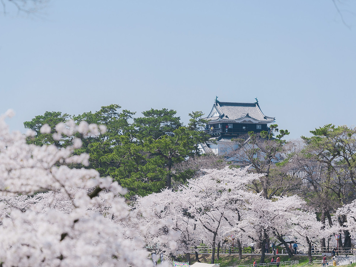 開花 2020 桜 名古屋 予想